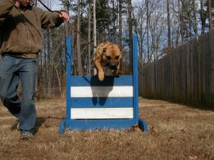 Why Train Your Dog? - Sanders Kennels