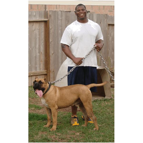 Presa Canario Puppies and Breeder | Sanders Kennels