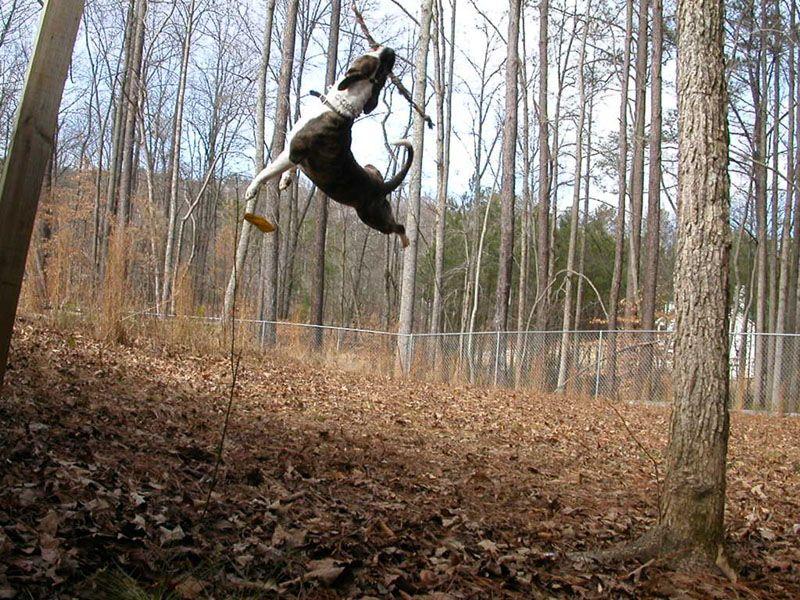 Protection Training For Dogs Atlanta Ga